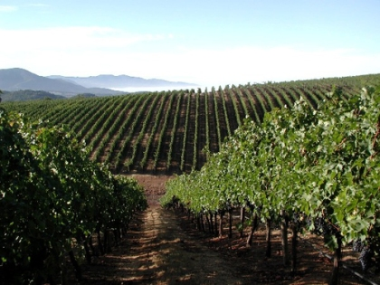 napavalleyvineyard